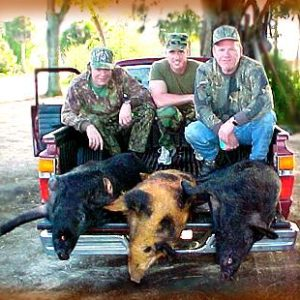 Wild Boar Hunt Report: February 17th, 2001