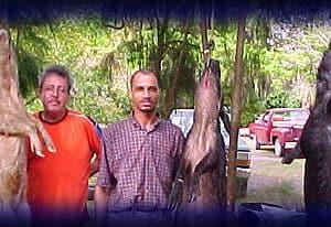 Wild Boar Hunt Report: February 17th, 2003