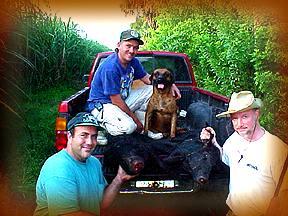 Wild Boar Hunt Report: October 21st, 2000