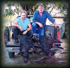 Wild Boar Hunt Report: February 19th, 2001