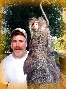 Wild Boar Hunt Report: September 2nd, 2000