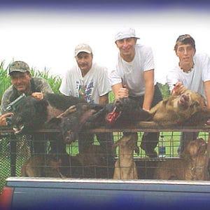 Wild Boar Hunt Report: October 14th, 2005